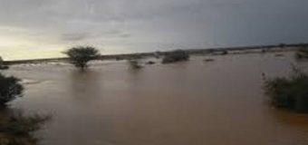 Roobab Raxmaadka eebe kamid ah oo ka da'ey Deegaano hoos taga Somaliland.